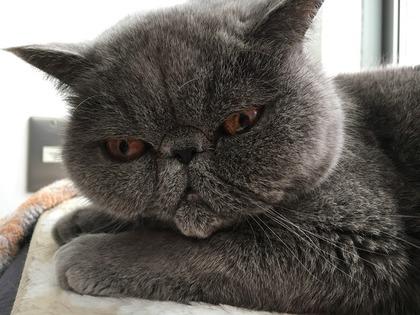 ぼくに枕は?