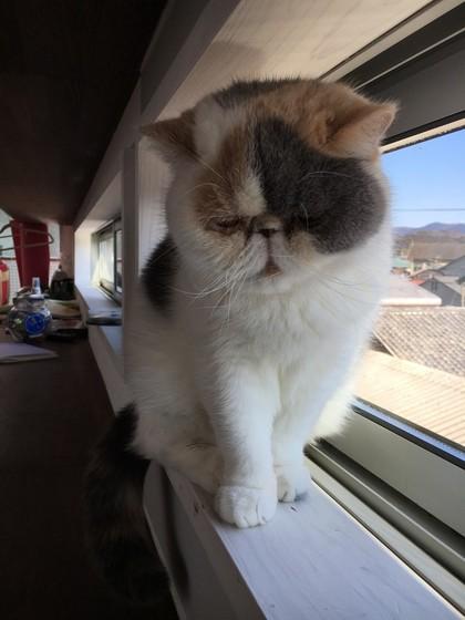 今日は窓際で待機
