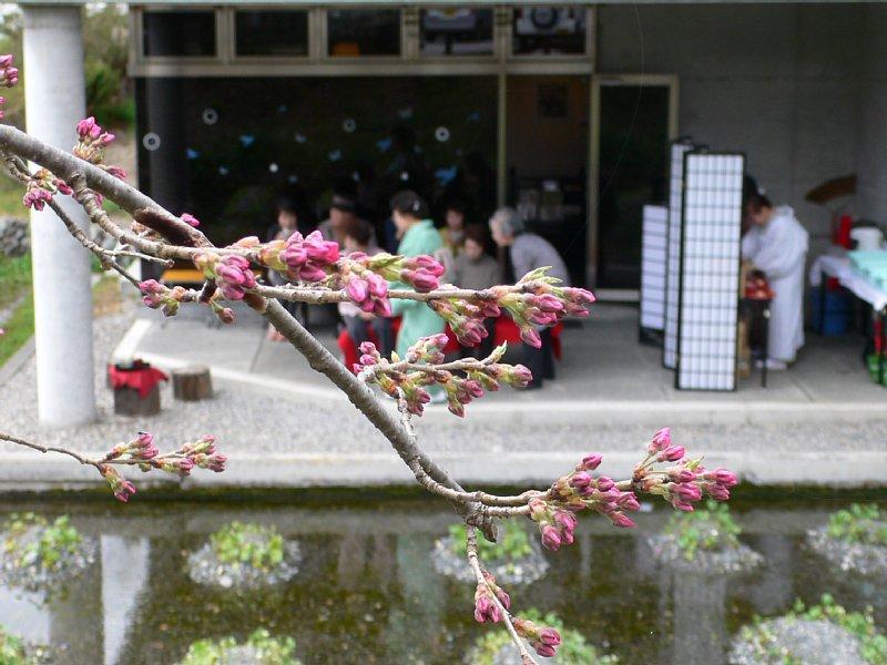 開花間近の蕾