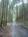 170422ウエットの木立の中を上って行く