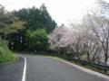 170422裏大正池のしだれ桜