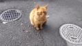 170326大原のファミマに常駐する猫