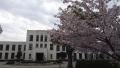 170415桜を見に旧豊郷小へ
