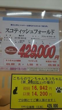 子ネコきーやん値段