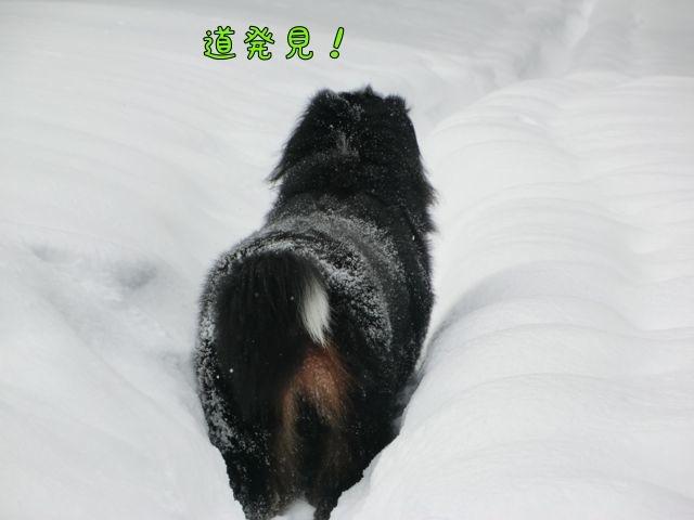 CIMG2972.jpg