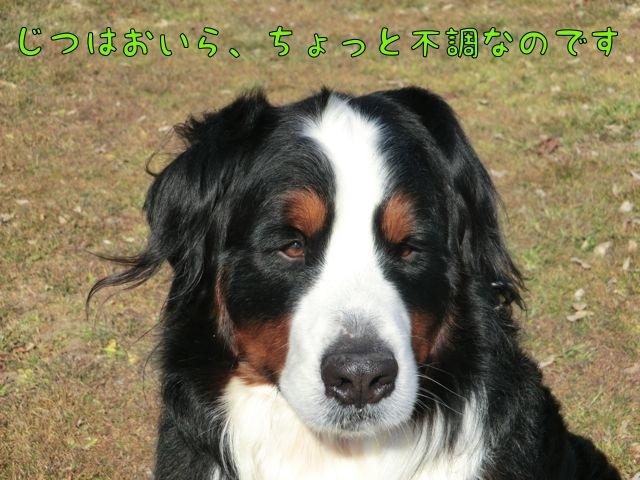 CIMG3085_20170226154408991.jpg