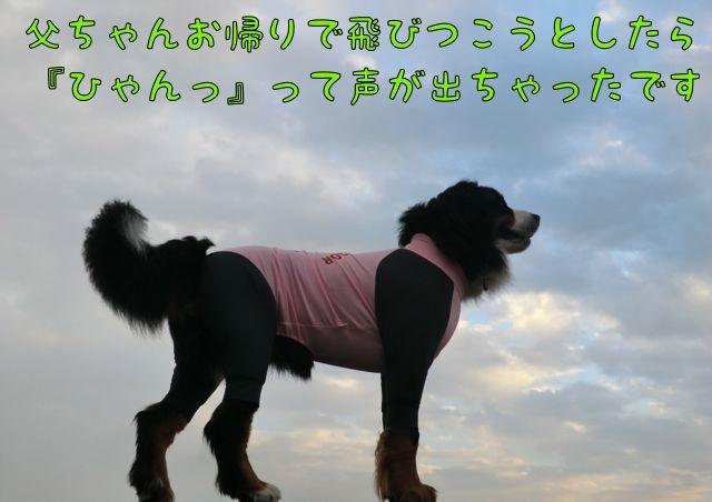 CIMG3176_20170226154412e8e.jpg