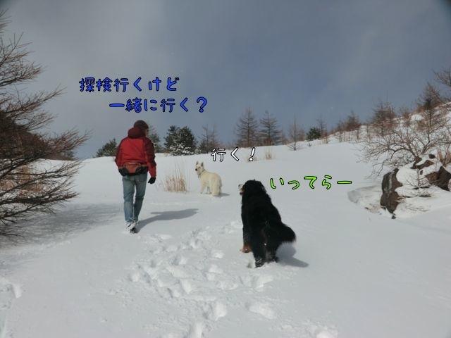 CIMG3611.jpg
