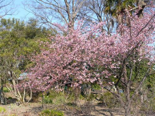 ブログ0218春