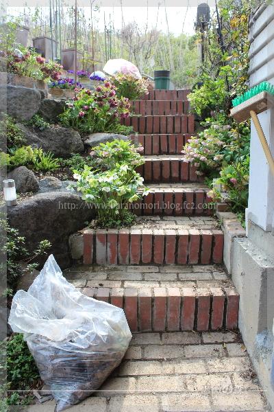 20170409 クリスマスローズ ロックガーデン 階段