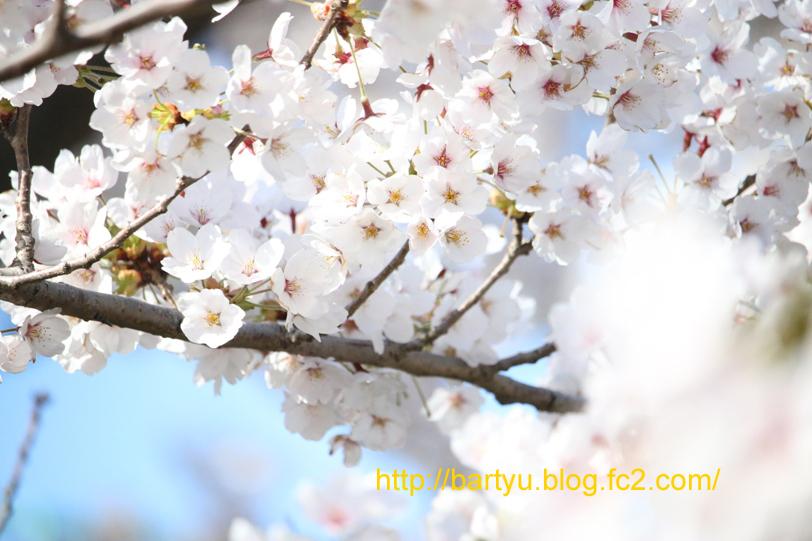 IMG_6719.jpg
