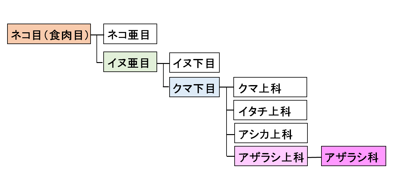 ネコ目分類図