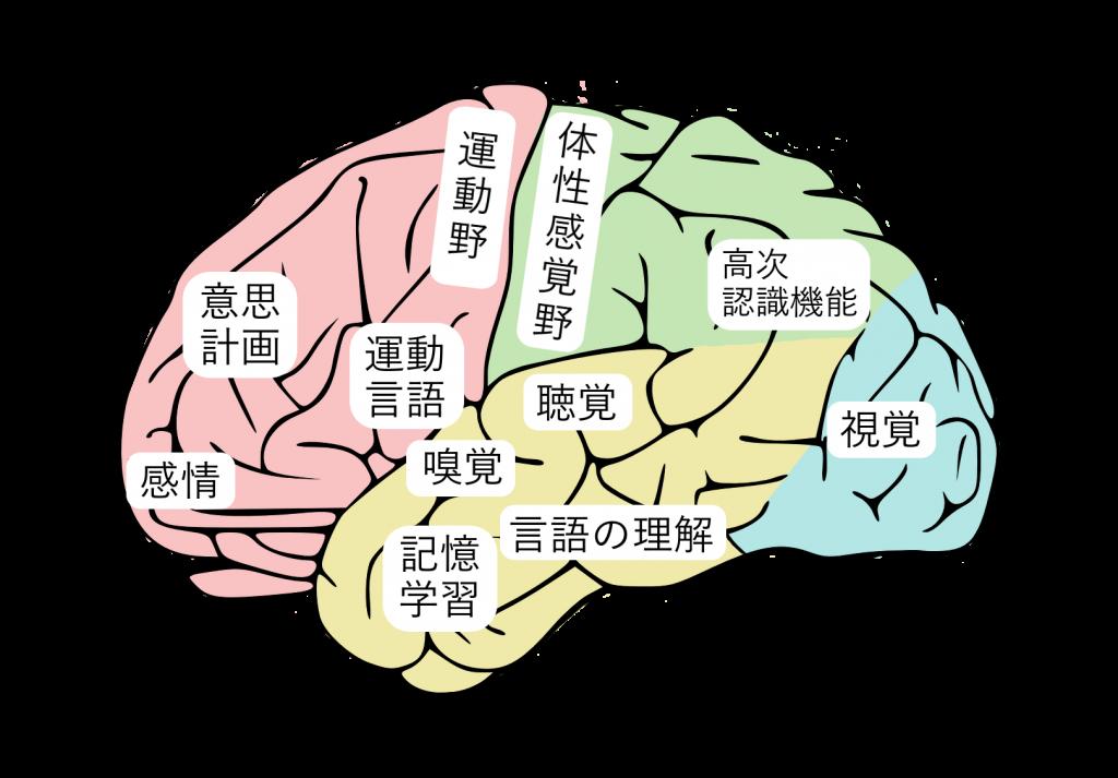 脳の機能マップ