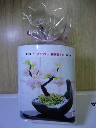 桜盆栽キット①