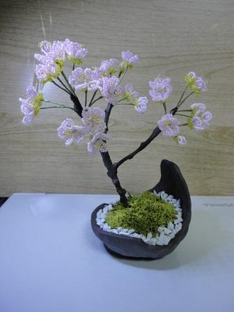 桜盆栽キット②