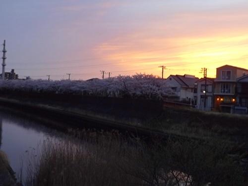 近所の桜と夕焼け