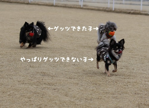 IMG_1496.jpg