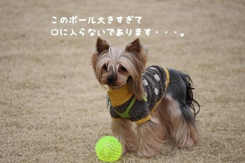 IMG_1505.jpg