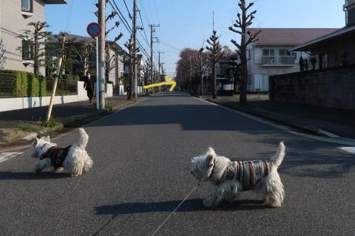 chintaraarukutohosuugafueru4.jpg