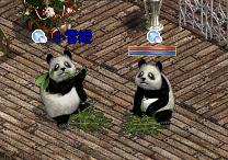 ダブルパンダ