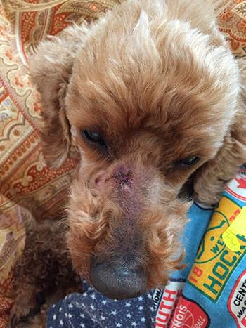 犬の歯槽膿漏