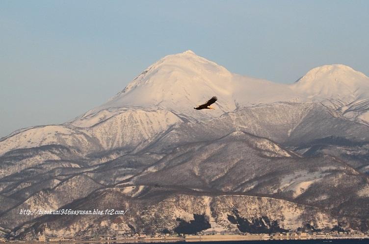 2011-2-6 羅臼・流氷 399-A-10