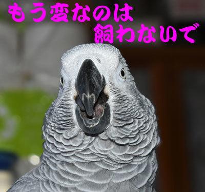 22_飼うな