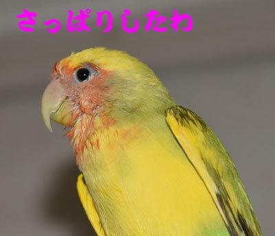 3_さっぱり