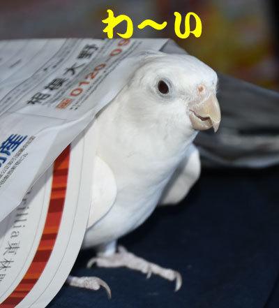 3_アンジュ1