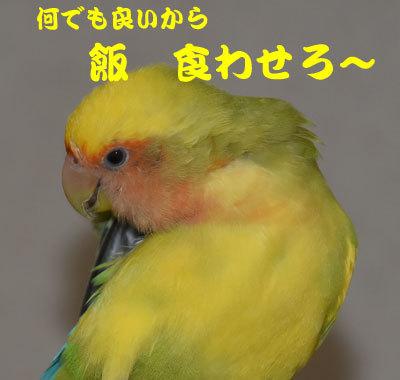 8_食わせろ