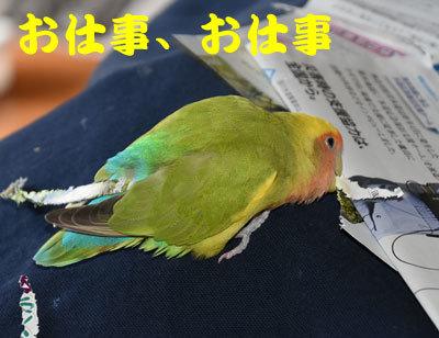 1_お仕事