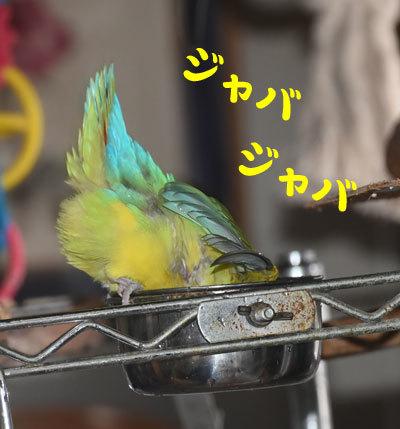 1_水浴び