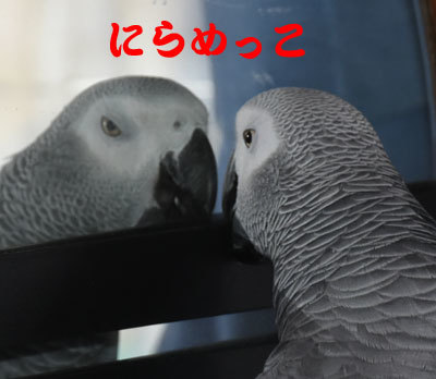 5_にらめっこ