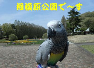 1_相模原公園