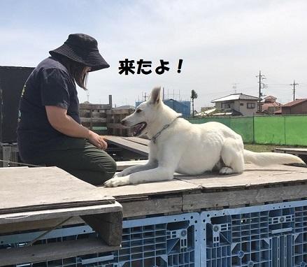 びーちゃん③