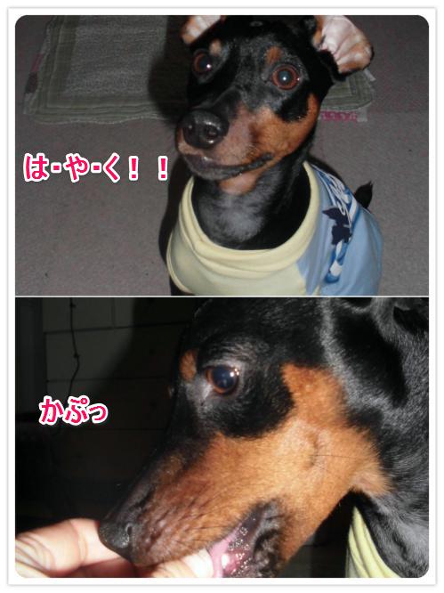 かぷっ_0221