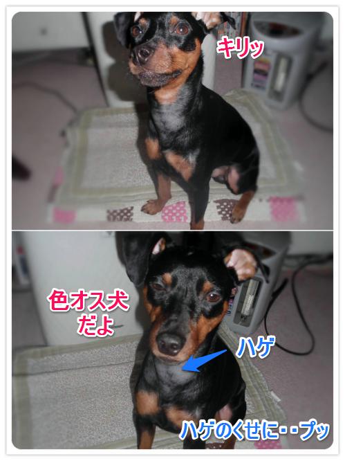 色犬_0221