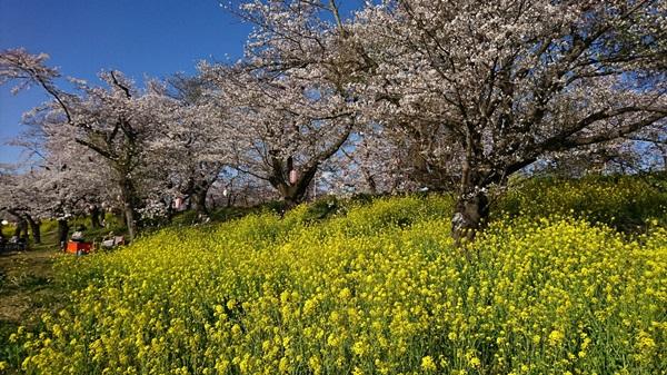 DSC_0307桜