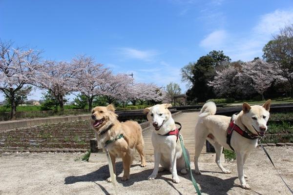 002山崎公園
