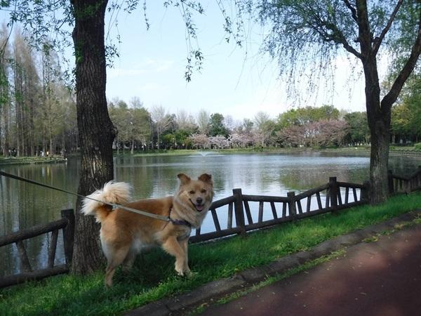 DSCF1328総合公園