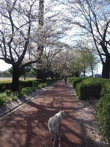 DSCF1343総合公園