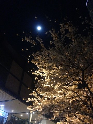 2017夜桜 (1) (コピー)