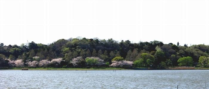 佐鳴湖西岸を望む 2017 4 12  2 佐鳴湖東岸 8598