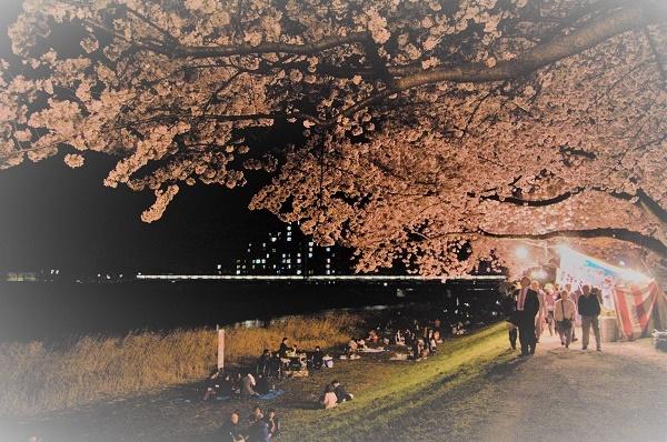 夜桜011