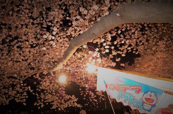 夜桜005
