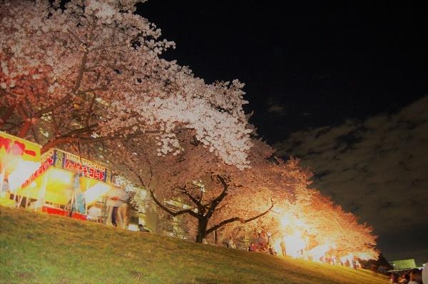 夜桜008