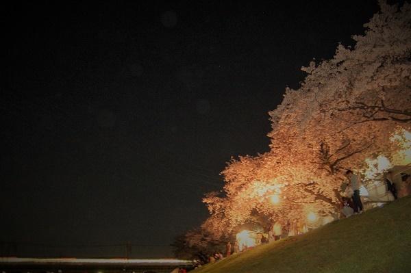 夜桜009