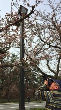 弘前桜4-17 (10)_500