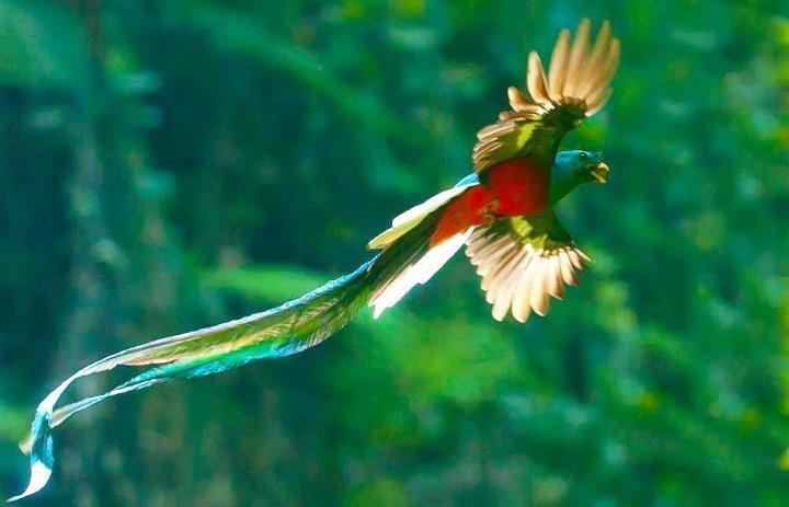 El-Quetzal.jpg