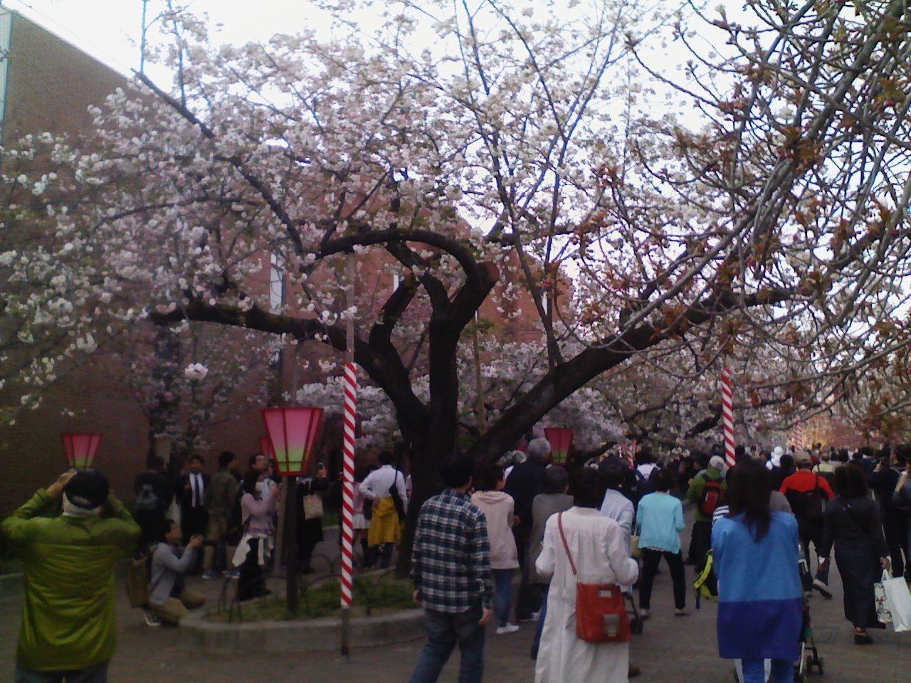 2017_04_14_桜の通り抜け